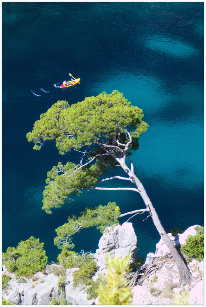 Pin d'Alep et kayak Calanques
