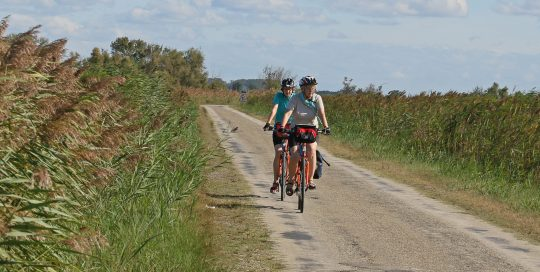 cyclists in Camargue